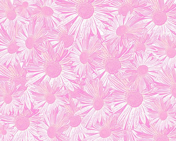 pink-daisy-background.jpg